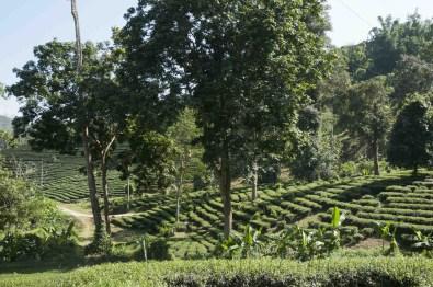 05 Trekking Chiang Rai 18