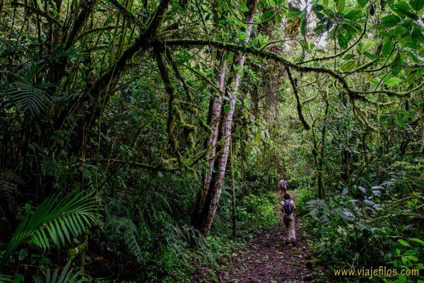 Viajefilos en el Sendero Quetzal de Boquete