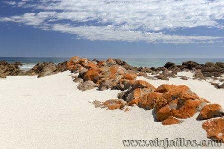 Viajefilos en Australia. Kangaroo 70