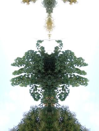 Cielo y árbol Fotos creativas.