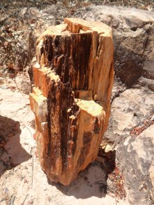 Floresta Petrificada - Missão Velha - Chapada do Araripe - Ceará (9)