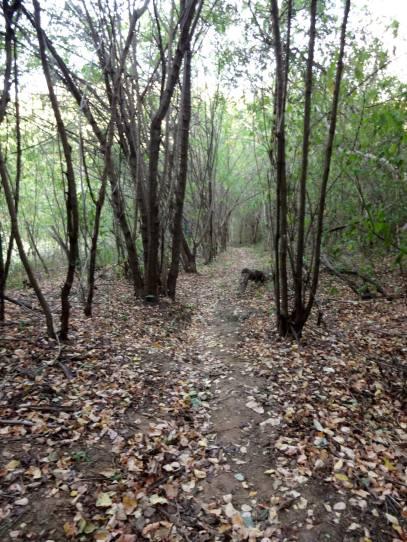 Trecho da trilha em meio à Floresta Nacional do Araripe