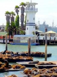 Leões Marinhos do Pier 39 - O que fazer em San Francisco