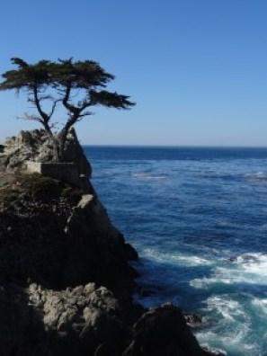 Lone Cypress - Arvores Famosas