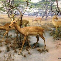 Mamíferos no Museu de história de Nova York