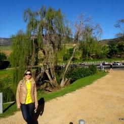 Passeio em Groot Constancia - Vinícola perto de Cape Town na Africa do Sul