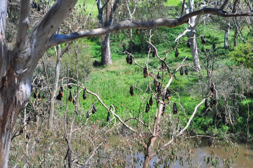 Bellbird Picnic Area, Yarra Bend Park