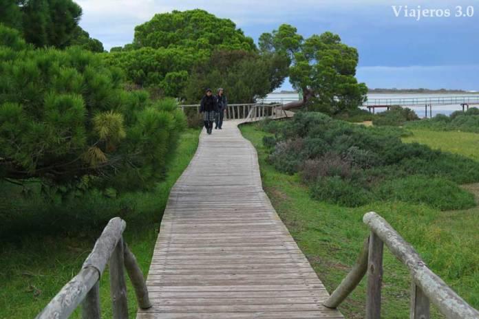 bosques mediterráneos de Doñana