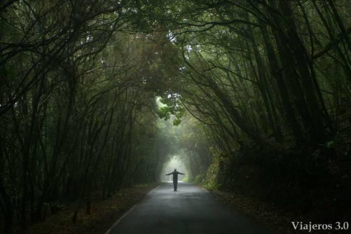 Bosques de Laurisilva en Garajonay, qué hacer y qué ver en La Gomera