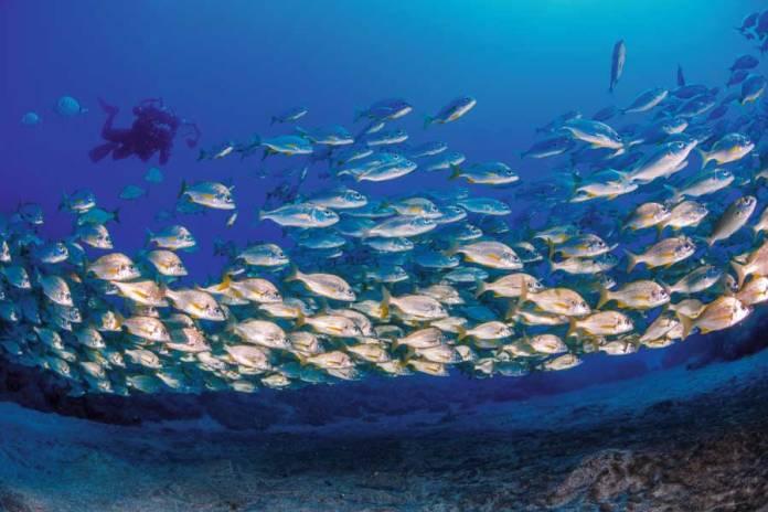 Haber submarinismo y snorkel en Las Camarias