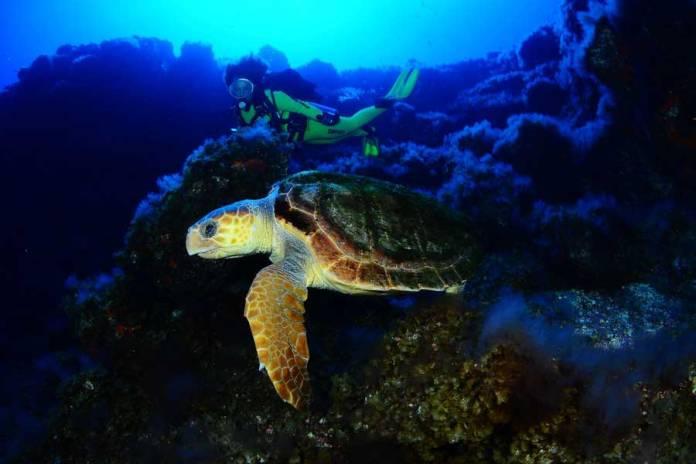 bucear entre tortugas en Las Canarias