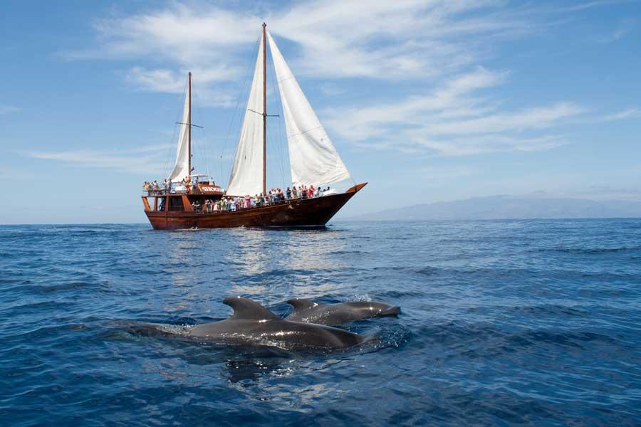 El Cabildo logra que el Estado paralice la concesión de licencias a embarcaciones de observación de cetáceos en la Isla
