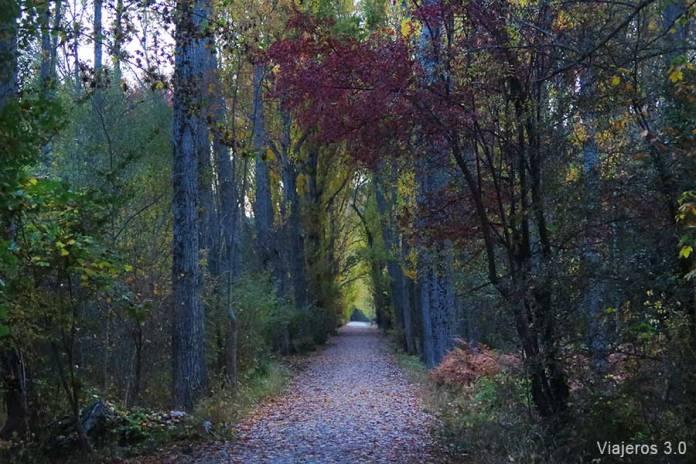 Bosque de Finlandia, un fin de semana en la Sierra de Guadarrama