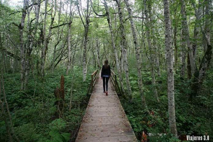 bosques en Parque Nacional Biogradska