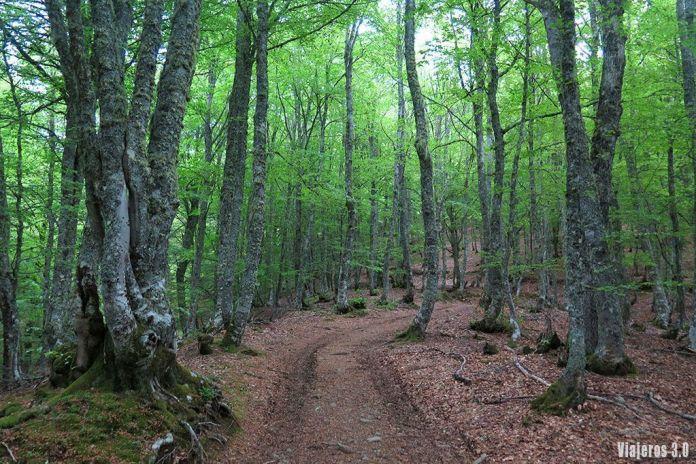 hayedo, senderismo en el Valle de Sajambre