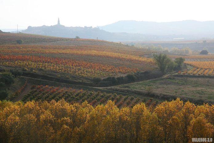 viñedos, actividades de enoturismo en La Rioja