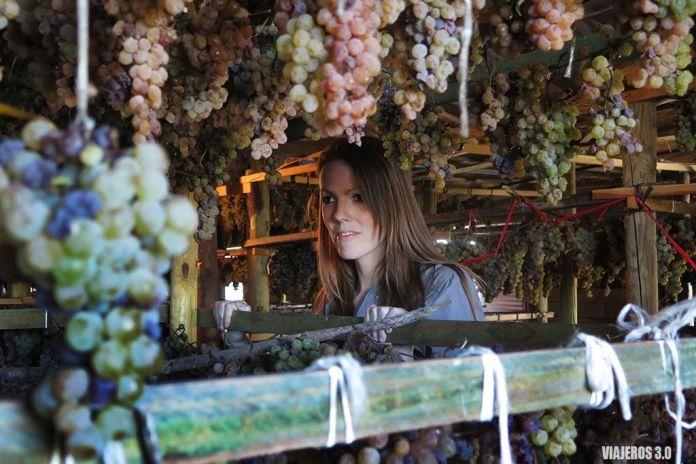 vino supurao, actividades de enoturismo en La Rioja