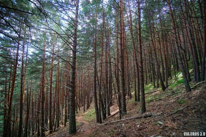 Bosques en la ruta al pico San Millán