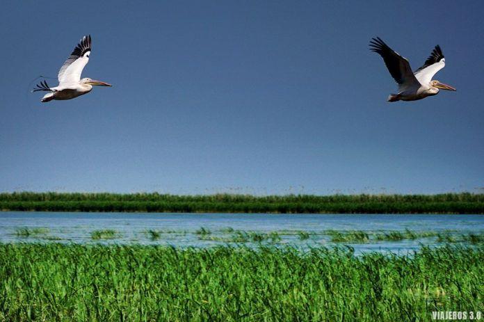 Pelícanos, que ver en el Delta del Danubio