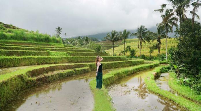 Qué ver en Bali en una semana, arrozales