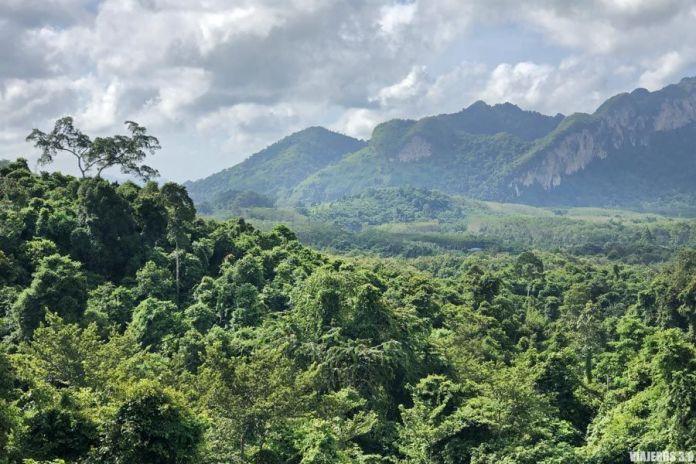 Naturaleza virgen en Doi Inthanon.