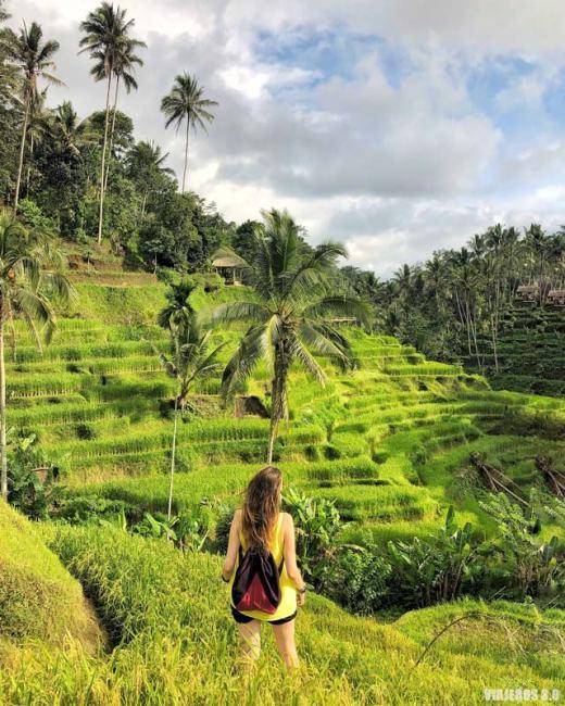 Arrozales de Tegalalang, que hacer y que ver en Ubud