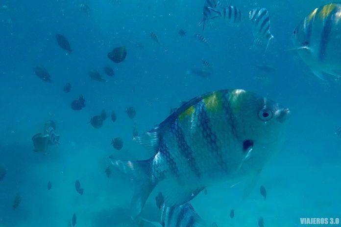 bucear, qué hacer en las islas Gili