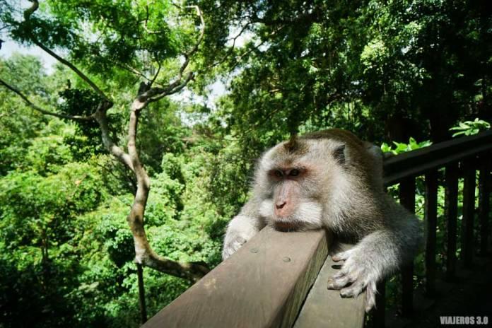 Que hacer y que ver en Bali, Monkey Forest