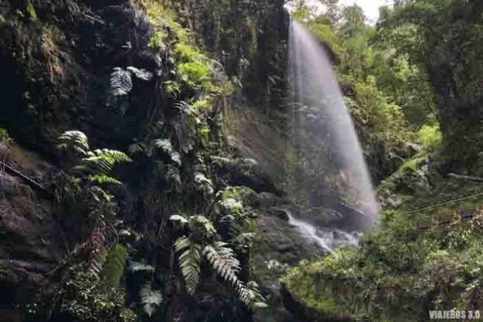 Laurilsilva canaria, lugares que ver en La Palma