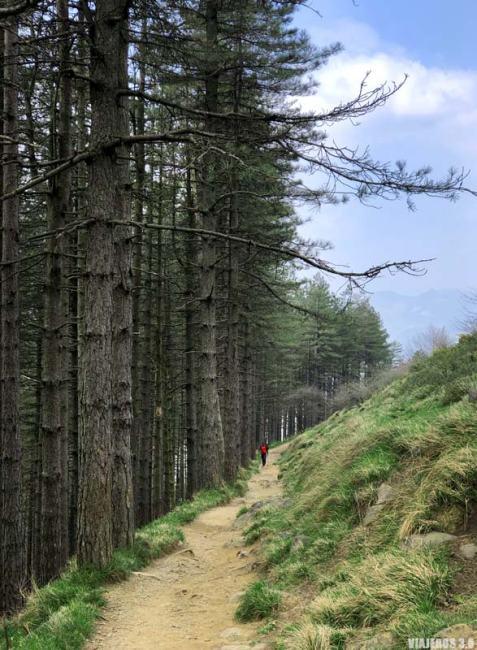 Entre bosques por la ruta al monte Txindoki.