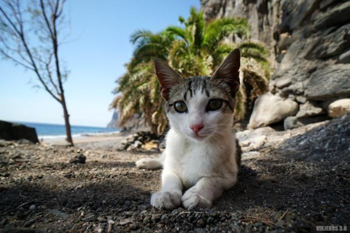 Gatito junto a la playa de Guguy.