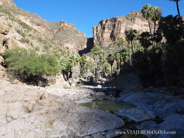 Arroyo con piedras rodeado de palmeras en el fondo de un cañón