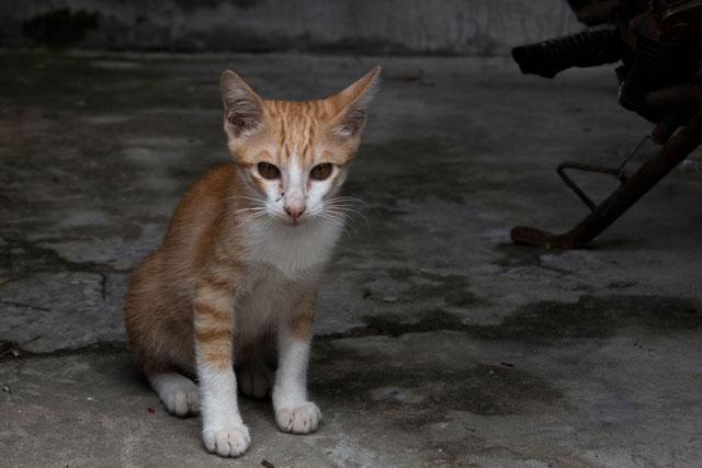 Da Nang Outdoor Adventure gatito mascota