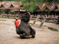 Photo of Día 8: Tailandia (Chiang Mai: Excursión Aventura con elefantes, ruta selva, carrera carruajes, descenso río, etc. Mercado Orquídeas, Bazar nocturno, Bubbles, etc).