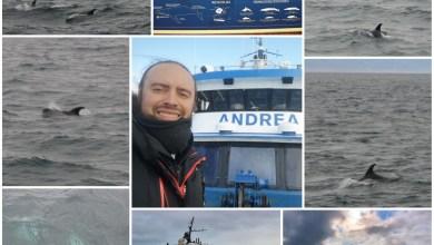 Avistamiento de ballenas, delfines y cetáceos desde Reikiavik (Islandia).
