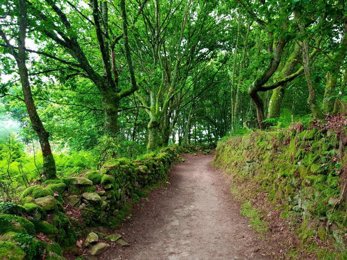 El Camino de Santiago. Tu mejor opción para viajar por el norte de España de forma económica.