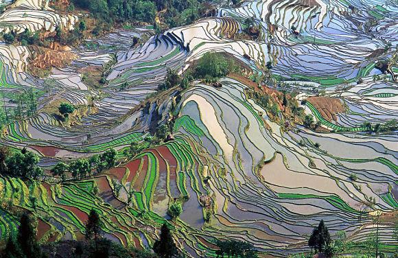Vista aérea de las Terrazas de Yunnan