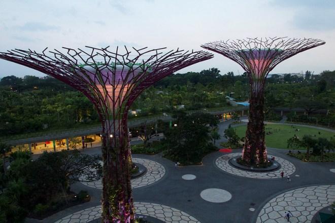 Los súper árboles de Singapur vista de las copas