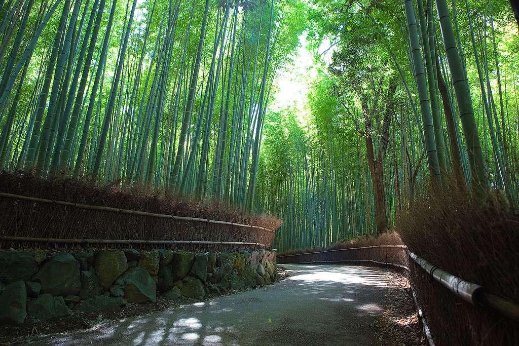 51 lugares más bellos del mundo. Arashiyama.