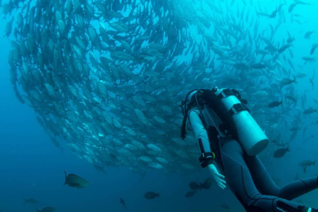 Guías y análisis de equipo de submarinismo