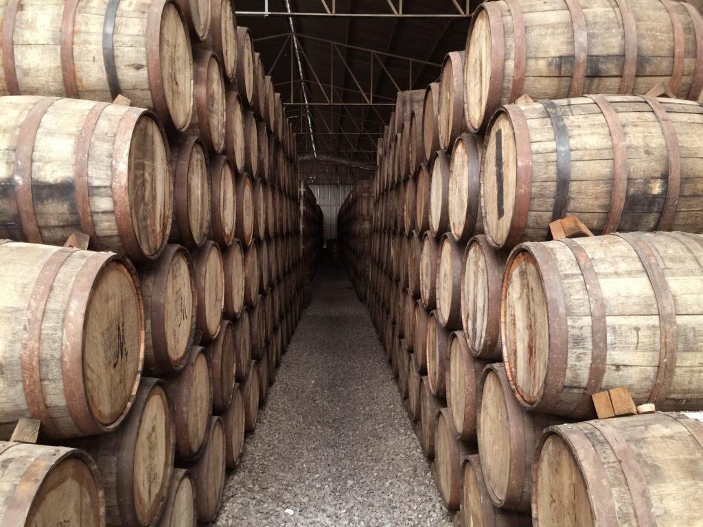 Logroño: paisajes con olor a vino 1