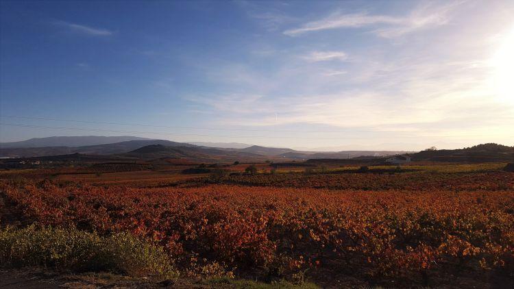 Turismo del vino, viñedos