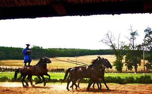 A Puszta Schmerling lovas gyakorlat a lenyugozo es egyedi lovas Art
