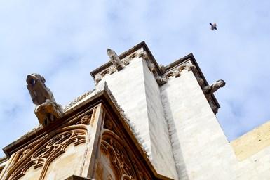 Imagen picado paloma volando gárgolas fachada Seu Catedral Santa Tecla Tarragona