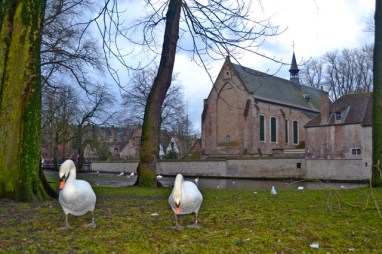 Cisnes césped Iglesia calles Brujas Bélgica