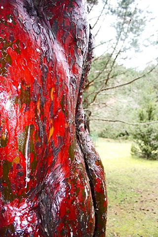 Corteza roja árbol Parque Natural Cuenca