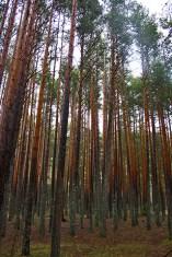Grupo árboles altos Sierra Cuenca