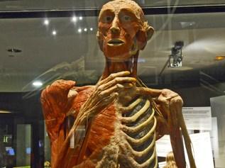 Cuerpo humano anatomía Parque de las Ciencias Granada