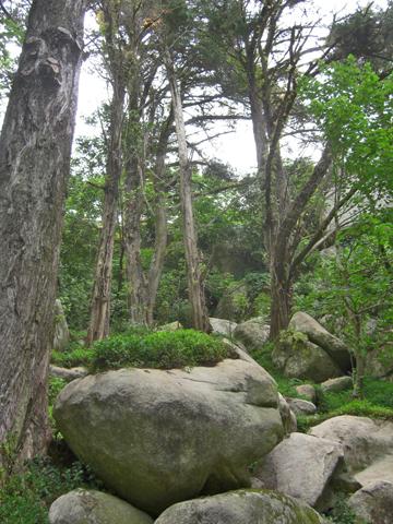 Piedras y árboles entrada Castelo dos Mouros Portugal