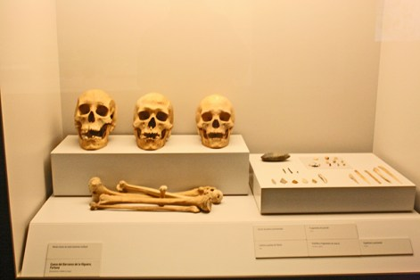 Cráneos huesos Museo Arqueológico Murcia